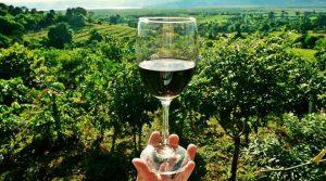 puglia e vino